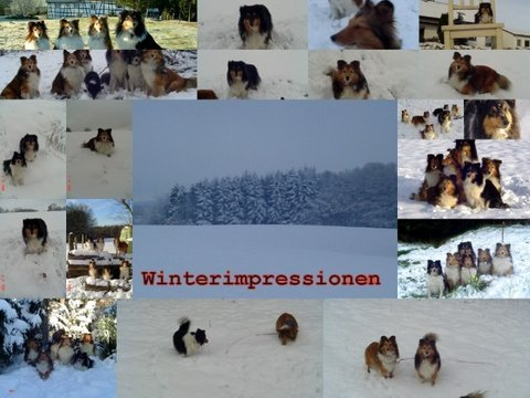 collage winter 2008